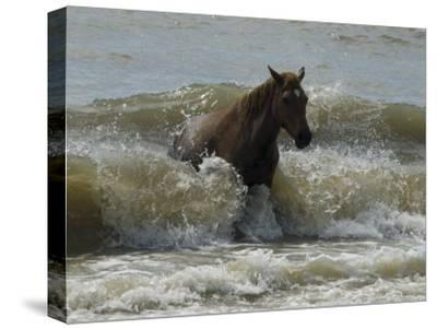 Horse Rides the Waves in the Atlantic Ocean-Stacy Gold-Stretched Canvas Print