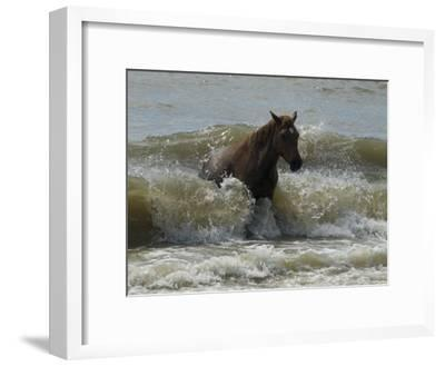 Horse Rides the Waves in the Atlantic Ocean-Stacy Gold-Framed Photographic Print