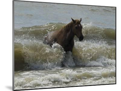 Horse Rides the Waves in the Atlantic Ocean-Stacy Gold-Mounted Photographic Print
