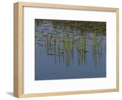 Lilly Pads Float on a River in Wisconsin-Stacy Gold-Framed Photographic Print