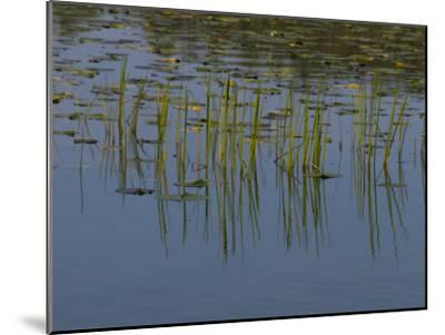 Lilly Pads Float on a River in Wisconsin-Stacy Gold-Mounted Photographic Print