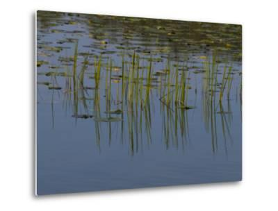 Lilly Pads Float on a River in Wisconsin-Stacy Gold-Metal Print