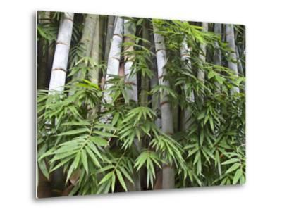 Close View of Bamboo with Leaves-Michael Melford-Metal Print