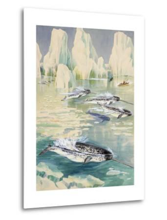 Narwhal Whales are Being Hunted by Eskimos-Else Bostelmann-Metal Print