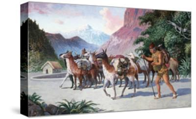 Llama Herders Drive their Pack, Loaded with Fine Textiles and Pottery-H.M. Herget-Stretched Canvas Print
