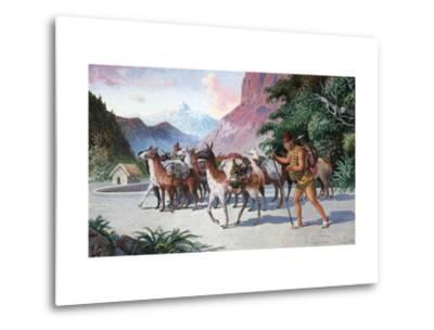 Llama Herders Drive their Pack, Loaded with Fine Textiles and Pottery-H.M. Herget-Metal Print