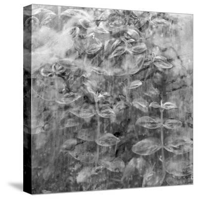 Plant Pressed Up to Glass in a Greenhouse Creates an Abstract Pattern-Keenpress-Stretched Canvas Print