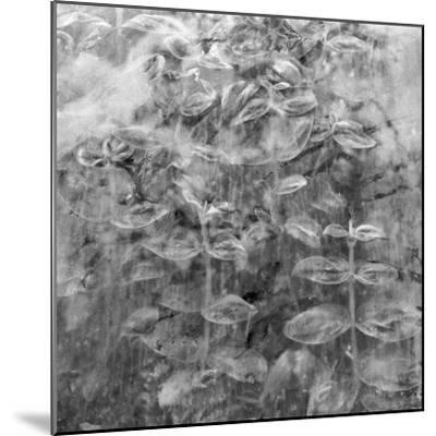 Plant Pressed Up to Glass in a Greenhouse Creates an Abstract Pattern-Keenpress-Mounted Photographic Print