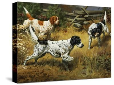 Quail Hides in a Covert from Pointing English Setters-Walter Weber-Stretched Canvas Print
