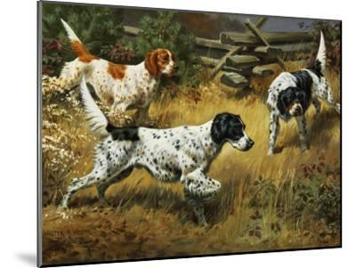 Quail Hides in a Covert from Pointing English Setters-Walter Weber-Mounted Photographic Print