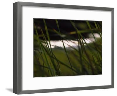 Marsh Grasses Sway in the Breeze with Water in the Background-Brian Gordon Green-Framed Photographic Print