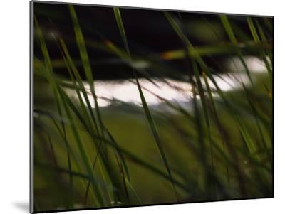 Marsh Grasses Sway in the Breeze with Water in the Background-Brian Gordon Green-Mounted Photographic Print