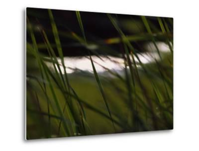 Marsh Grasses Sway in the Breeze with Water in the Background-Brian Gordon Green-Metal Print