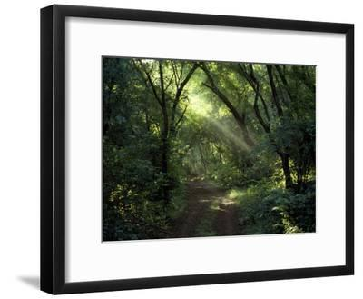 Rays of Sunlight Pass Through a Forest Canopy over a Trail-Jason Edwards-Framed Photographic Print