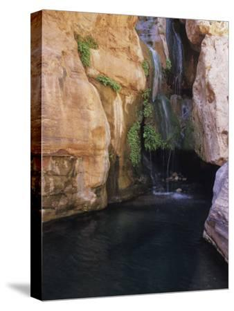 Elves Chasm,Grand Canyon National Park, Arizona-David Edwards-Stretched Canvas Print