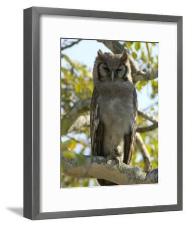 Verreaux's Eagle Owl, Bubo Lacteus, or Milky Eagle Owl, in a Tree-Paul Sutherland-Framed Photographic Print