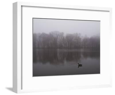 Canada Goose on a Lake in the Fog-Todd Gipstein-Framed Photographic Print