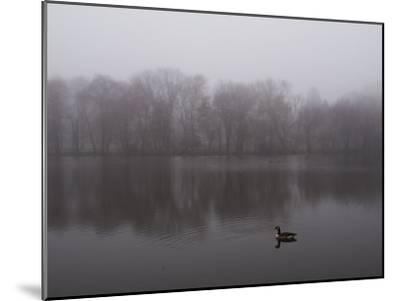 Canada Goose on a Lake in the Fog-Todd Gipstein-Mounted Photographic Print