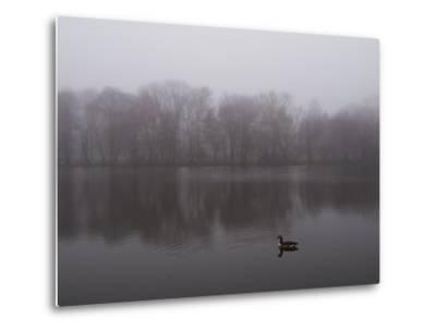 Canada Goose on a Lake in the Fog-Todd Gipstein-Metal Print