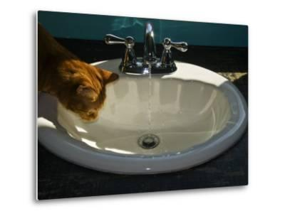 Orange Tabby Cat Watching Water Flow into a Bathroom Sink-Todd Gipstein-Metal Print