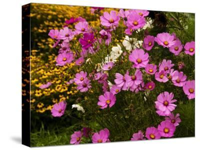 Flowers Growing in a Garden-Todd Gipstein-Stretched Canvas Print