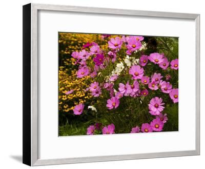Flowers Growing in a Garden-Todd Gipstein-Framed Photographic Print