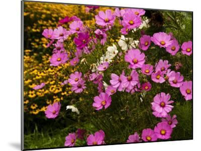 Flowers Growing in a Garden-Todd Gipstein-Mounted Photographic Print