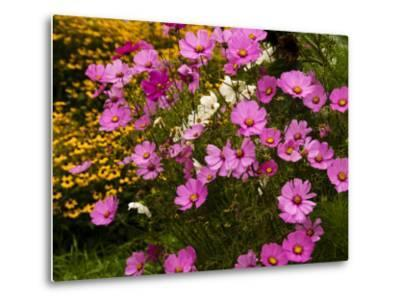 Flowers Growing in a Garden-Todd Gipstein-Metal Print