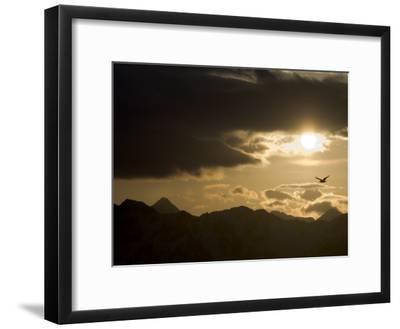Gull Flies over Copper River Delta, Alaska-Michael S^ Quinton-Framed Photographic Print