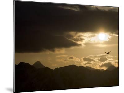 Gull Flies over Copper River Delta, Alaska-Michael S^ Quinton-Mounted Photographic Print