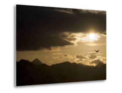 Gull Flies over Copper River Delta, Alaska-Michael S^ Quinton-Metal Print