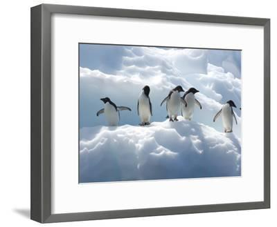 Adelie Penguins Lined Up on an Iceberg-Tom Murphy-Framed Photographic Print