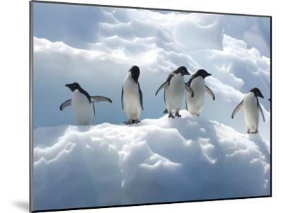 Adelie Penguins Lined Up on an Iceberg-Tom Murphy-Mounted Photographic Print