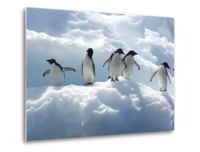 Adelie Penguins Lined Up on an Iceberg-Tom Murphy-Metal Print