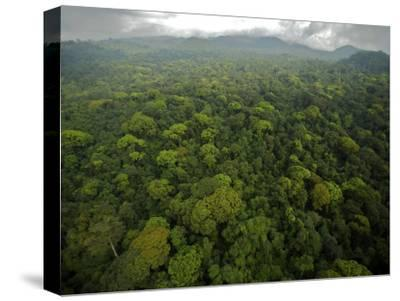 Rain Forest Canopy in the South Coast Region of Bioko Island-Tim Laman-Stretched Canvas Print