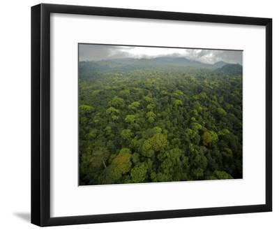 Rain Forest Canopy in the South Coast Region of Bioko Island-Tim Laman-Framed Photographic Print