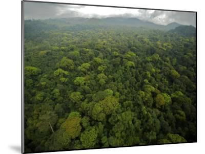 Rain Forest Canopy in the South Coast Region of Bioko Island-Tim Laman-Mounted Photographic Print