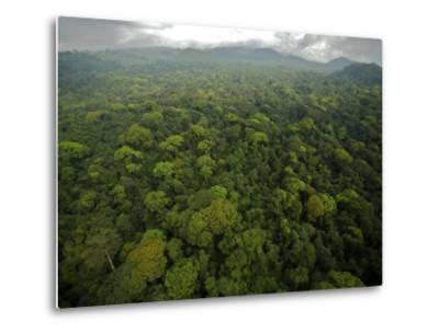 Rain Forest Canopy in the South Coast Region of Bioko Island-Tim Laman-Metal Print