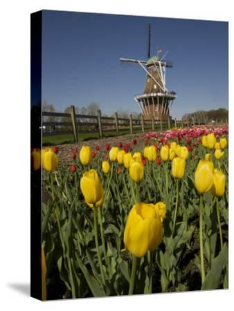 Tulip Time in Holland, Michigan-Tim Laman-Stretched Canvas Print