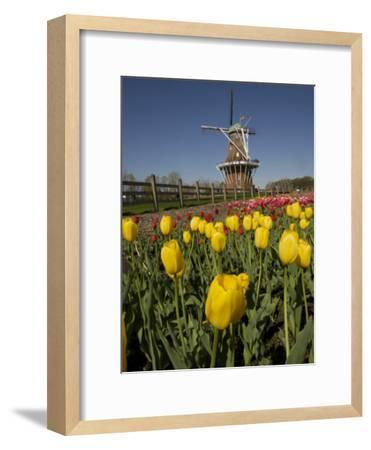 Tulip Time in Holland, Michigan-Tim Laman-Framed Photographic Print