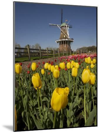 Tulip Time in Holland, Michigan-Tim Laman-Mounted Photographic Print