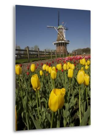 Tulip Time in Holland, Michigan-Tim Laman-Metal Print