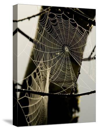 Spiderweb on a Branch-Bill Hatcher-Stretched Canvas Print