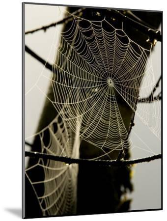 Spiderweb on a Branch-Bill Hatcher-Mounted Photographic Print