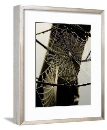 Spiderweb on a Branch-Bill Hatcher-Framed Photographic Print