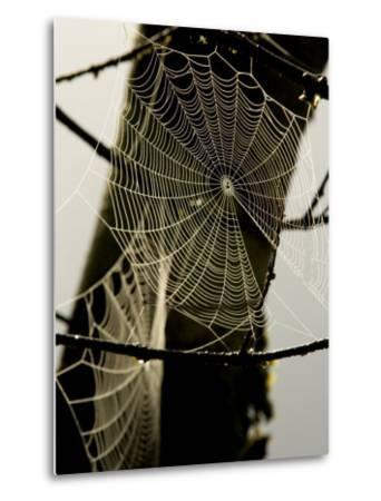 Spiderweb on a Branch-Bill Hatcher-Metal Print