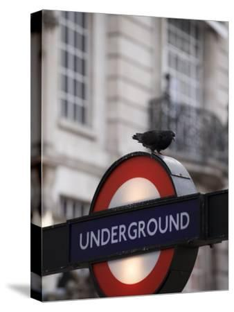 Pigeon Perched on a London Underground Sign-xPacifica-Stretched Canvas Print