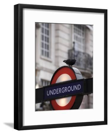 Pigeon Perched on a London Underground Sign-xPacifica-Framed Photographic Print