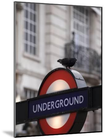 Pigeon Perched on a London Underground Sign-xPacifica-Mounted Photographic Print
