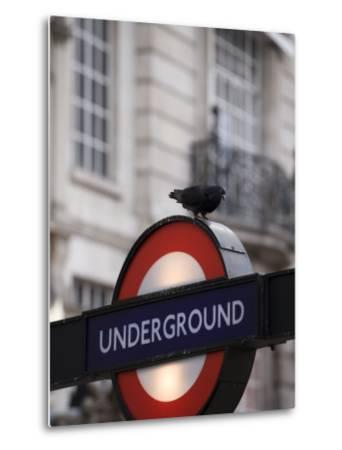 Pigeon Perched on a London Underground Sign-xPacifica-Metal Print